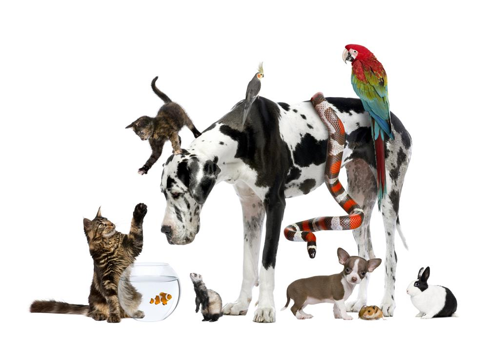 Pet animal pictures